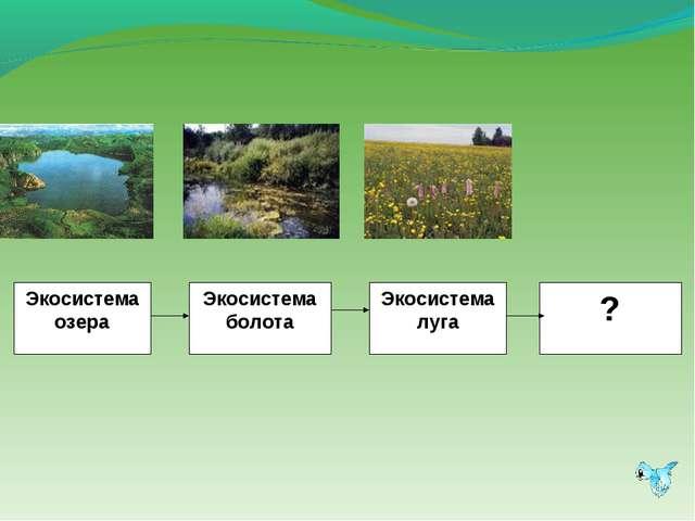 Экосистема озера Экосистема болота Экосистема луга ?