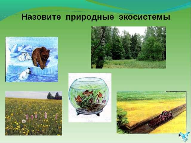 Назовите природные экосистемы