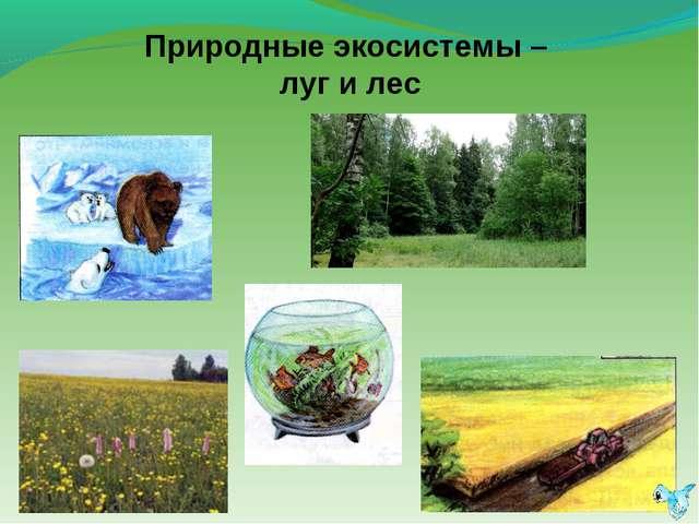 Природные экосистемы – луг и лес