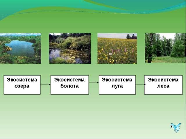 Экосистема озера Экосистема болота Экосистема луга Экосистема леса