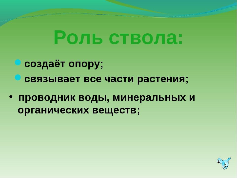 Роль ствола: создаёт опору; связывает все части растения; проводник воды, мин...