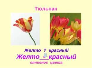 Тюльпан оттенок цвета Желто - красный Желто ? красный