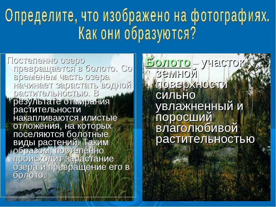 Постепенно озеро превращается в болото. Со временем часть озера начинает зар...