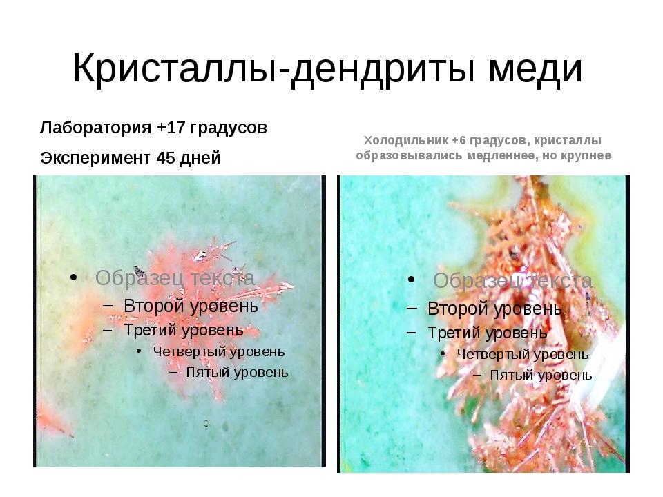 Кристаллы-дендриты меди Лаборатория +17 градусов Эксперимент 45 дней Холодиль...
