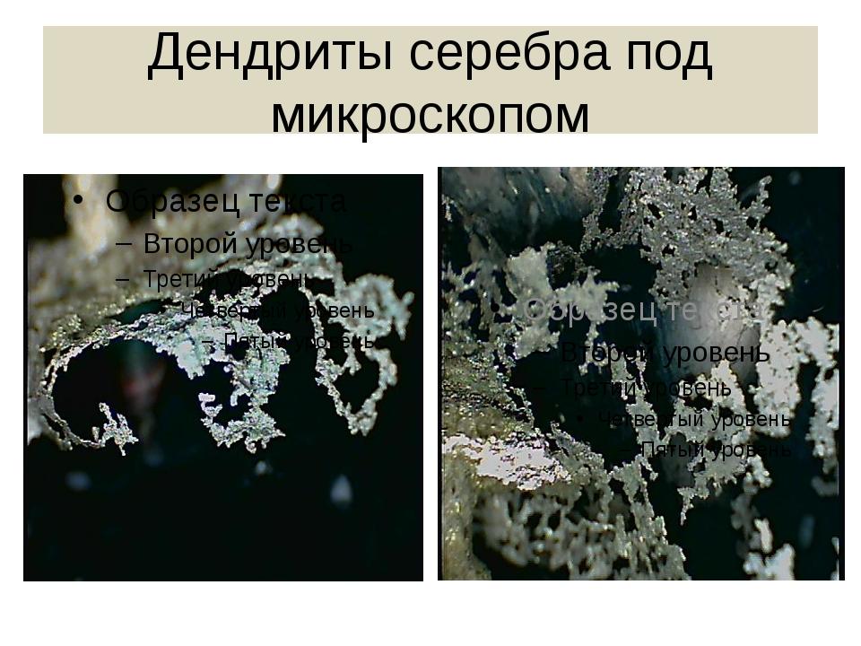 Дендриты серебра под микроскопом