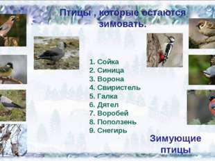 Птицы , которые остаются зимовать. Сойка Синица Ворона Свиристель Галка Дятел