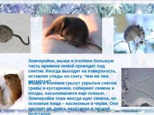 02.02.14 Землеройки, мыши и полёвки большую часть времени зимой проводят под
