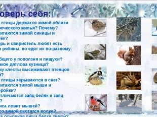 Проверь себя: Какие птицы держатся зимой вблизи человеческого жилья? Почему?