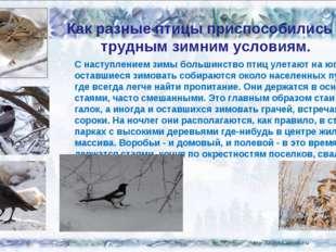 Как разные птицы приспособились к трудным зимним условиям. С наступлением зим