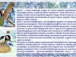 02.02.14 Дятел — птица заметная. Сидит на стволе дерева, вцепившись коготками