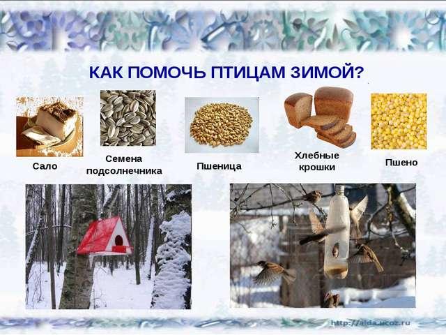 КАК ПОМОЧЬ ПТИЦАМ ЗИМОЙ? Сало Семена подсолнечника Пшеница Хлебные крошки Пшено