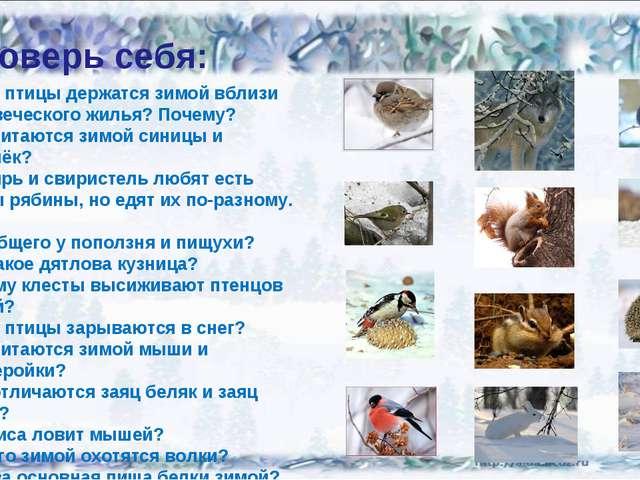 Проверь себя: Какие птицы держатся зимой вблизи человеческого жилья? Почему?...