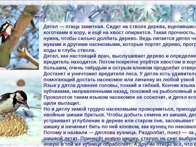 02.02.14 Дятел — птица заметная. Сидит на стволе дерева, вцепившись коготками...