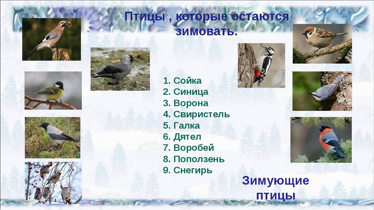 Птицы , которые остаются зимовать. Сойка Синица Ворона Свиристель Галка Дятел...