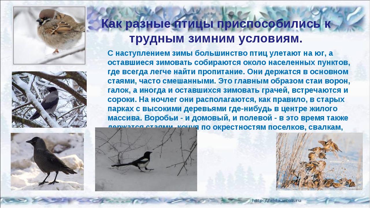 Как разные птицы приспособились к трудным зимним условиям. С наступлением зим...