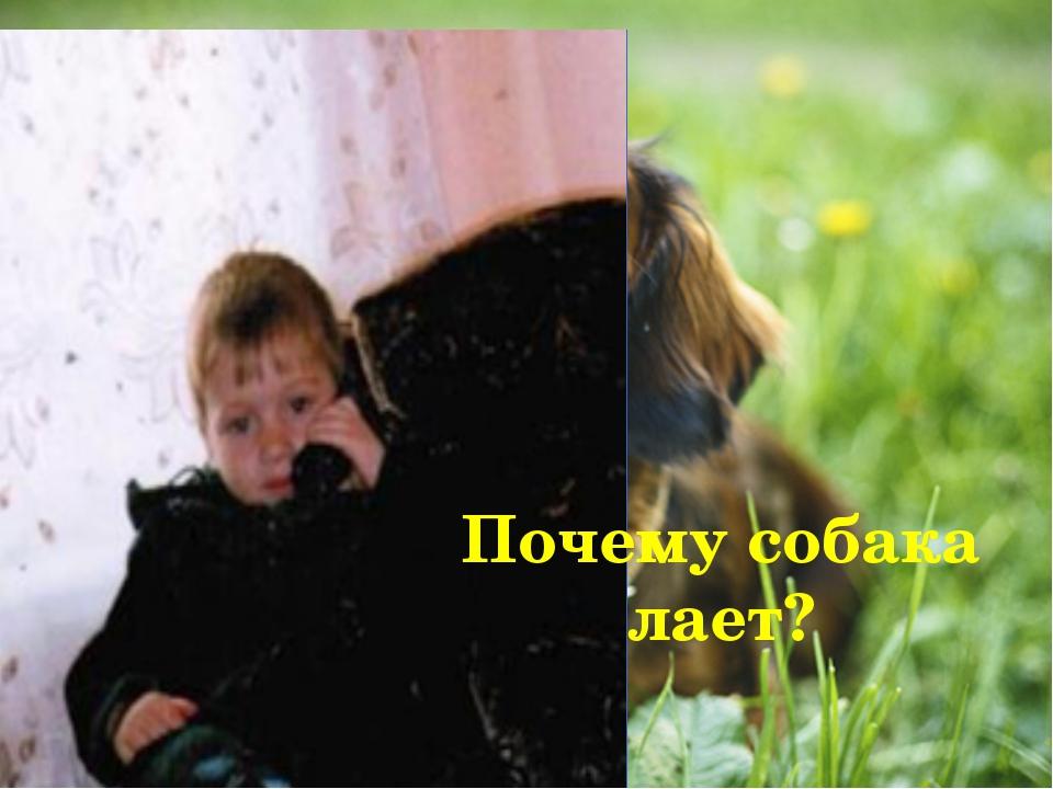 Почему собака лает?