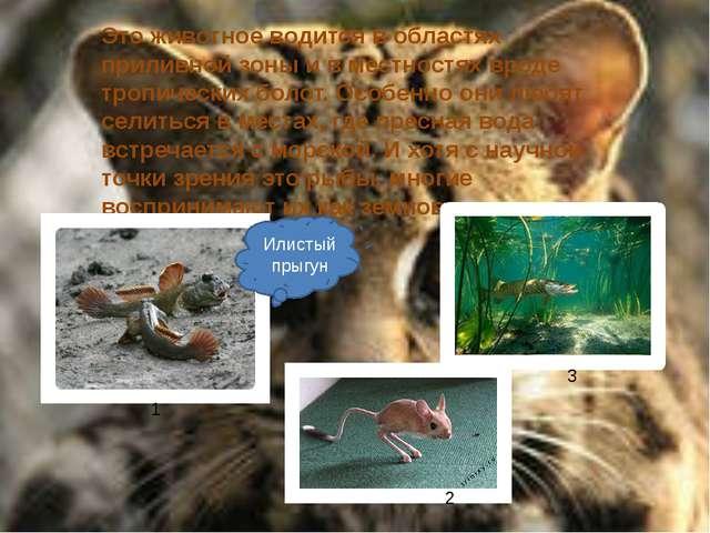 Это животное водится в областях приливной зоны и в местностях вроде тропичес...