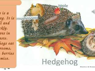 This is a hedgehog. It is small and prickly. It lives in forests. Hedgehogs e