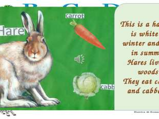 This is a hare. It is white in winter and grey in summer. Hares live in woods