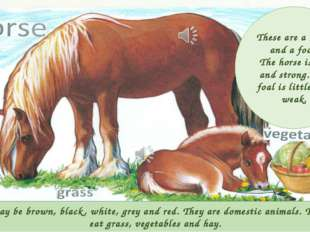 Horses may be brown, black, white, grey and red. They are domestic animals. T