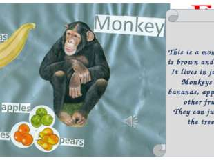 This is a monkey. It is brown and funny. It lives in jungles. Monkeys eat ban
