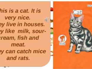 This is a cat. It is very nice. They live in houses. They like milk, sour-cre