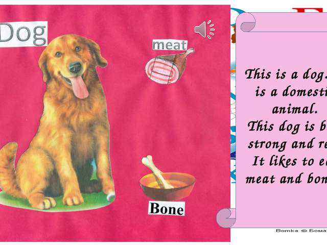 This is a dog. It is a domestic animal. This dog is big, strong and red. It l...