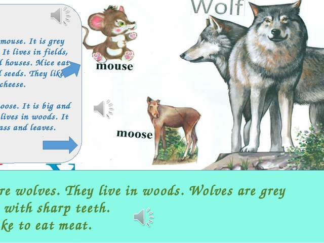 These are wolves. They live in woods. Wolves are grey and big with sharp teet...