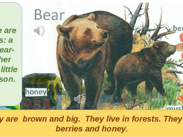 They are brown and big. They live in forests. They eat berries and honey. The...