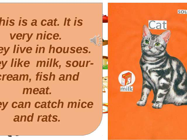 This is a cat. It is very nice. They live in houses. They like milk, sour-cre...