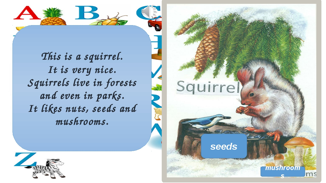 This is a squirrel. It is very nice. Squirrels live in forests and even in pa...