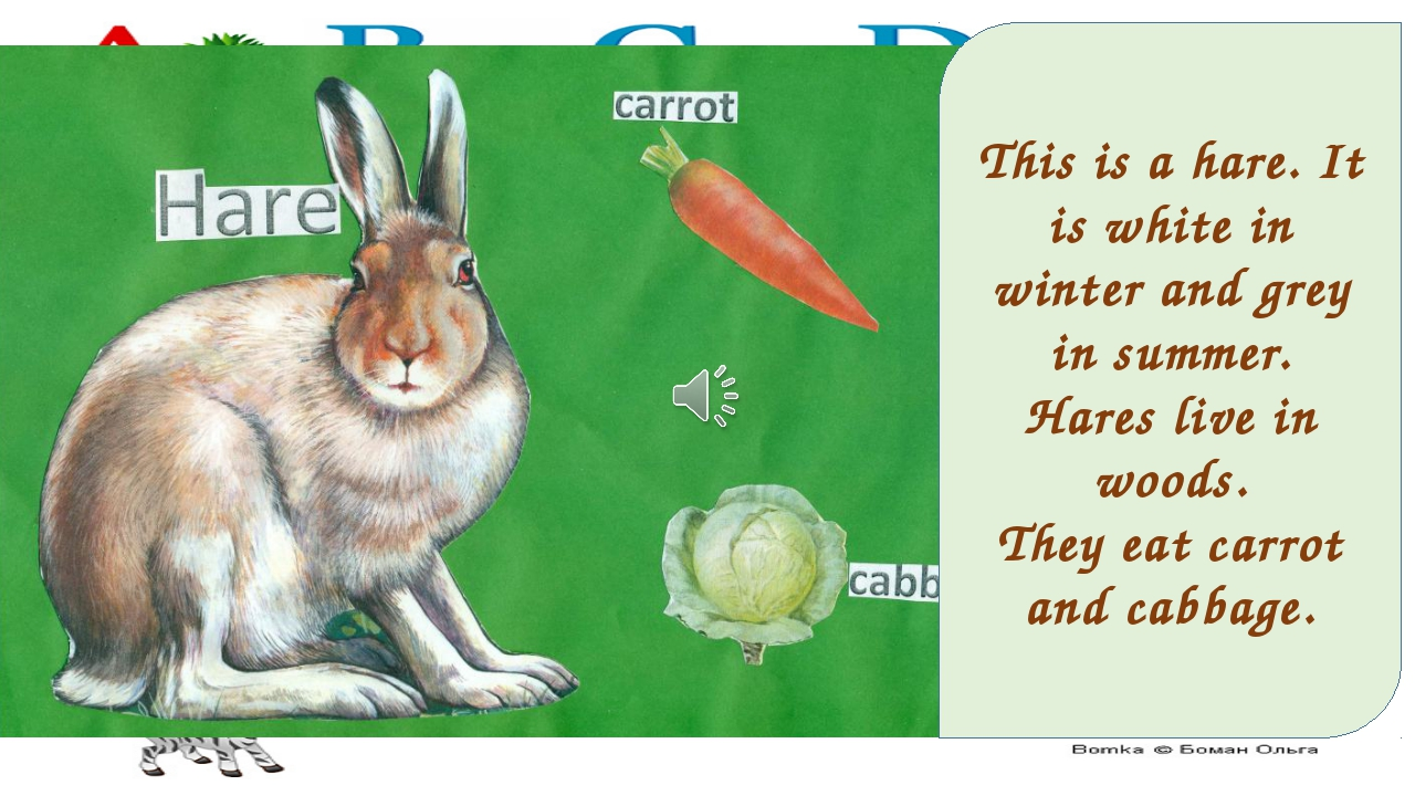 This is a hare. It is white in winter and grey in summer. Hares live in woods...