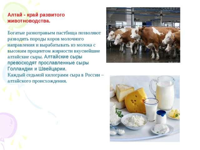 Алтай - край развитого животноводства. Богатые разнотравьем пастбища позволяю...