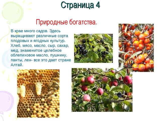 Страница 4 Природные богатства. В крае много садов. Здесь выращивают различны...