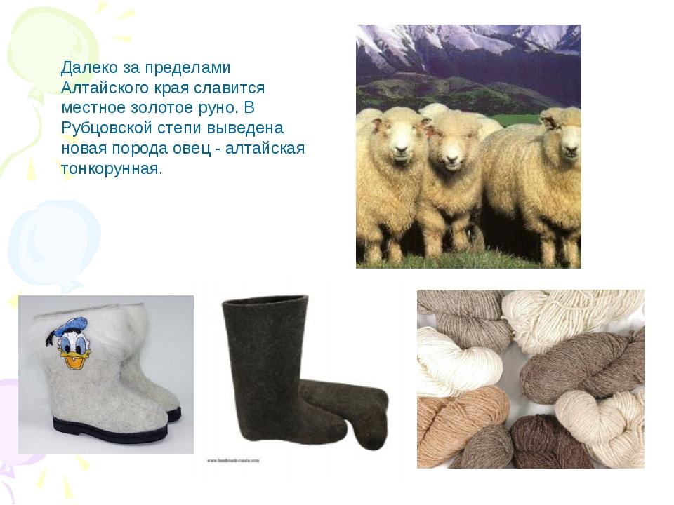 Далеко за пределами Алтайского края славится местное золотое руно. В Рубцовск...