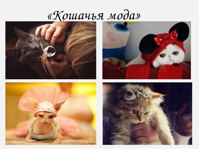 «Кошачья мода»