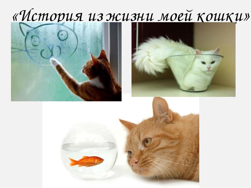 «История из жизни моей кошки»