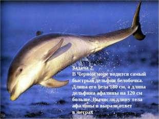 Задача 2. В Черном море водится самый быстрый дельфин белобочка. Длина его те