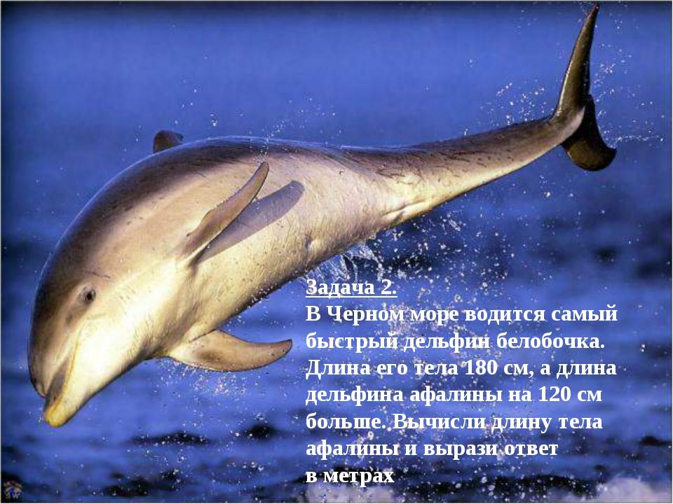 Задача 2. В Черном море водится самый быстрый дельфин белобочка. Длина его те...