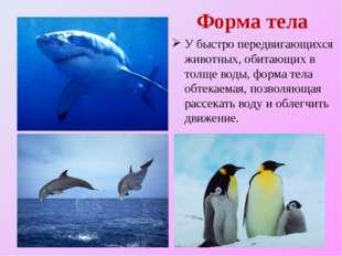 Форма тела У быстро передвигающихся животных, обитающих в толще воды, форма т