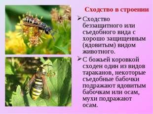 Сходство в строении Сходство беззащитного или съедобного вида с хорошо защище