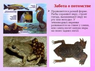 Забота о потомстве Проявляется в разной форме. Рыбы охраняют икру, строят гне