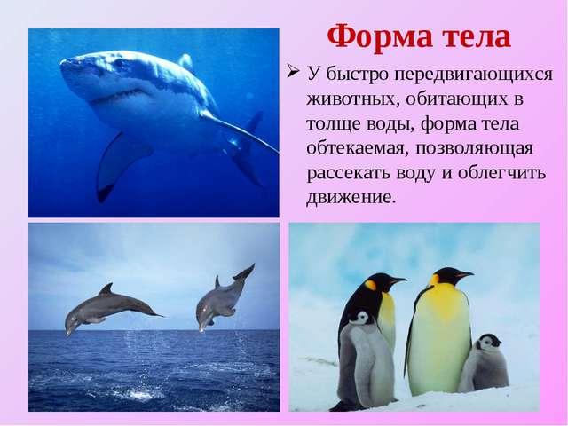 Форма тела У быстро передвигающихся животных, обитающих в толще воды, форма т...
