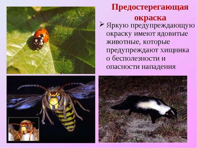Предостерегающая окраска Яркую предупреждающую окраску имеют ядовитые животны...