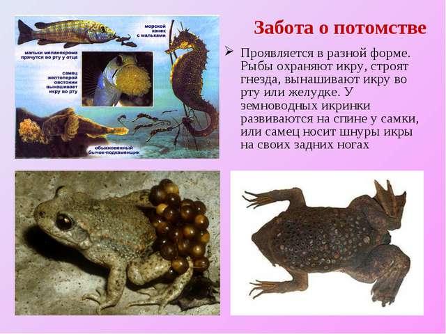 Забота о потомстве Проявляется в разной форме. Рыбы охраняют икру, строят гне...