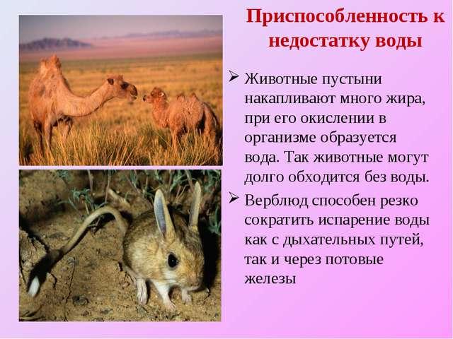 Приспособленность к недостатку воды Животные пустыни накапливают много жира,...