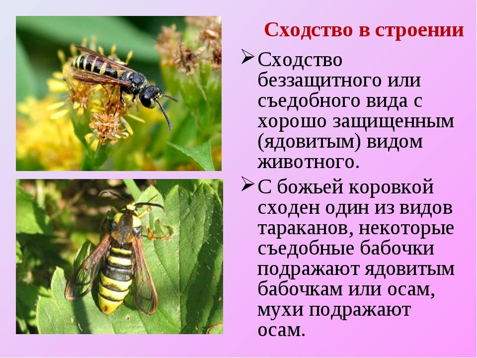 Сходство в строении Сходство беззащитного или съедобного вида с хорошо защище...