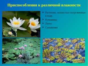 Приспособления к различной влажности Растения, полностью погруженные в воду.