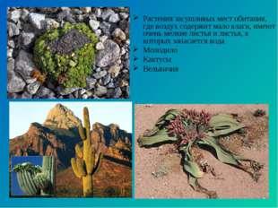 Растения засушливых мест обитания, где воздух содержит мало влаги, имеют очен
