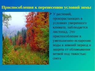 Приспособления к перенесению условий зимы У растений, произрастающих в услови